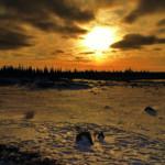 Flora-Fauna sunset I