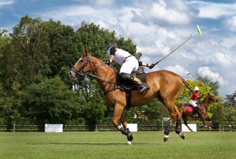 Polo-Pferd